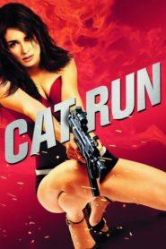 Uciekający kociak