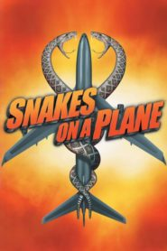 Węże w samolocie