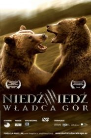 Niedźwiedź: Władca Gór