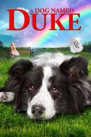 Pies imieniem Duke