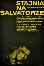 Stajnia na Salvatorze